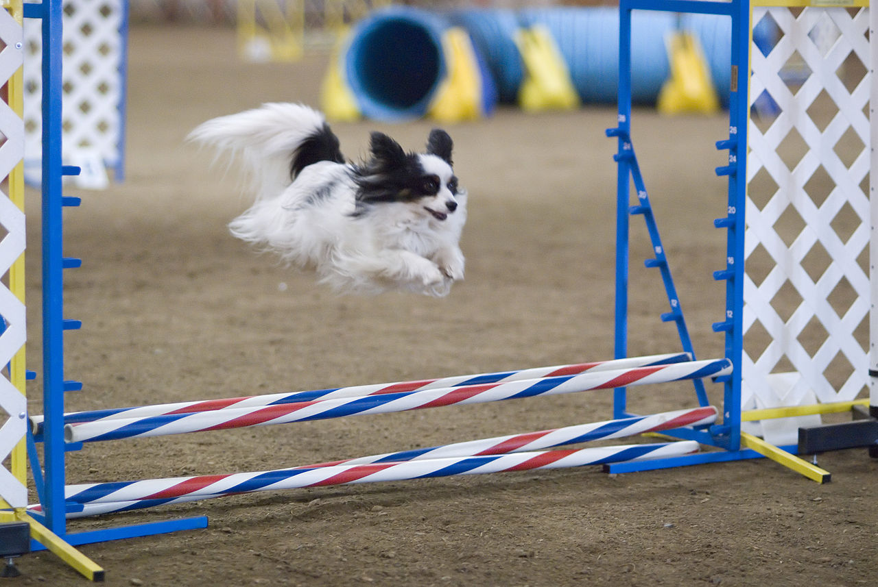 agility-ron-armstrong-from-helena-usa
